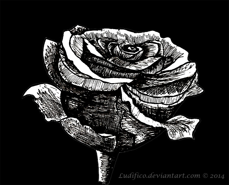Black Rose by Ludifico