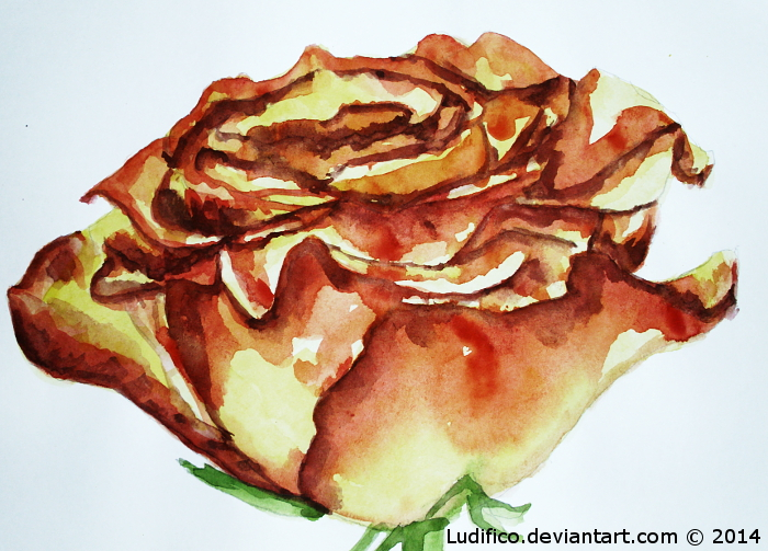 A Rose A Day... by Ludifico