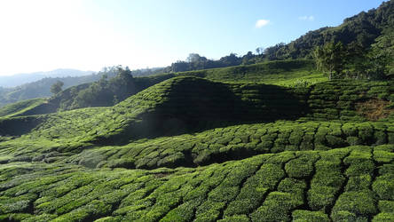 Cameron Highlands 3 by Puck85