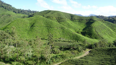 Cameron Highlands 4 by Puck85
