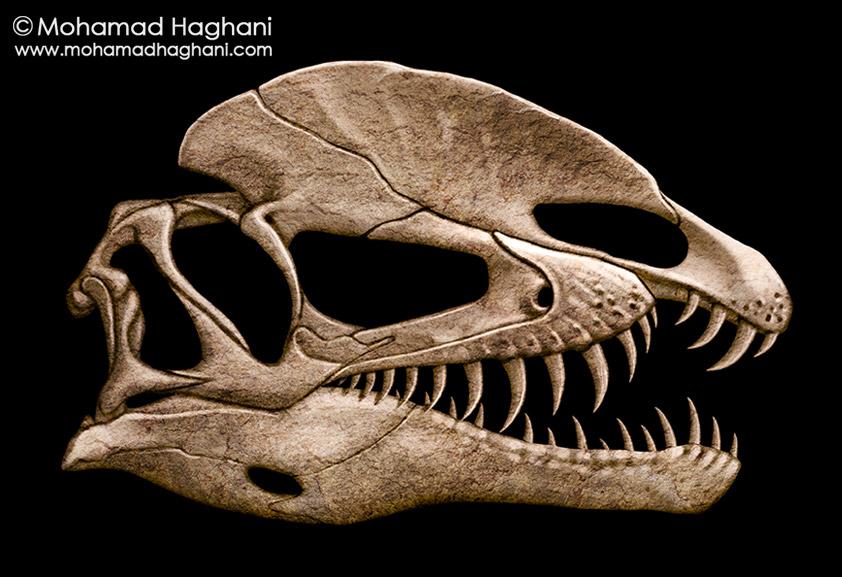 [Image: dilophosaurus_skull_by_haghani-dafthuj.jpg]
