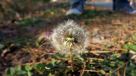 Autumn Pollen by SisstreDaethe