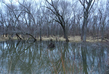 The Midwest Swamp by SisstreDaethe