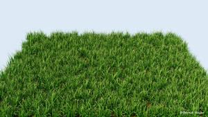 3D Common grass 01 detail