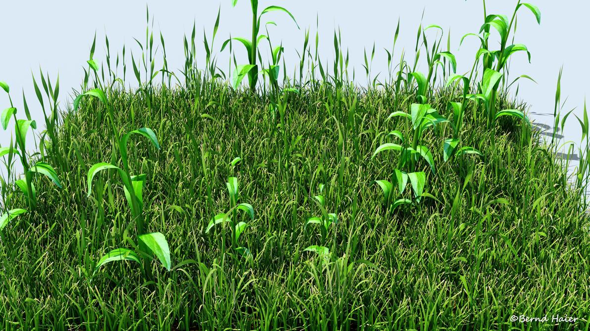 3D Wild grass 03 detail by Bernd-Haier
