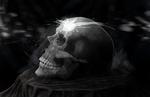 Study - Skull