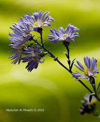 Purple Flower by aalmuashi