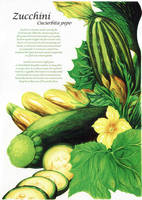Botanical Illustration Assignment by darkspeeds