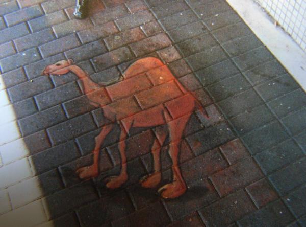chalk camel by wundercookie