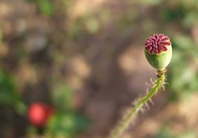 Opium by Effendacious