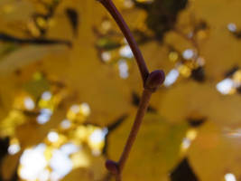 Autumning by Effendacious