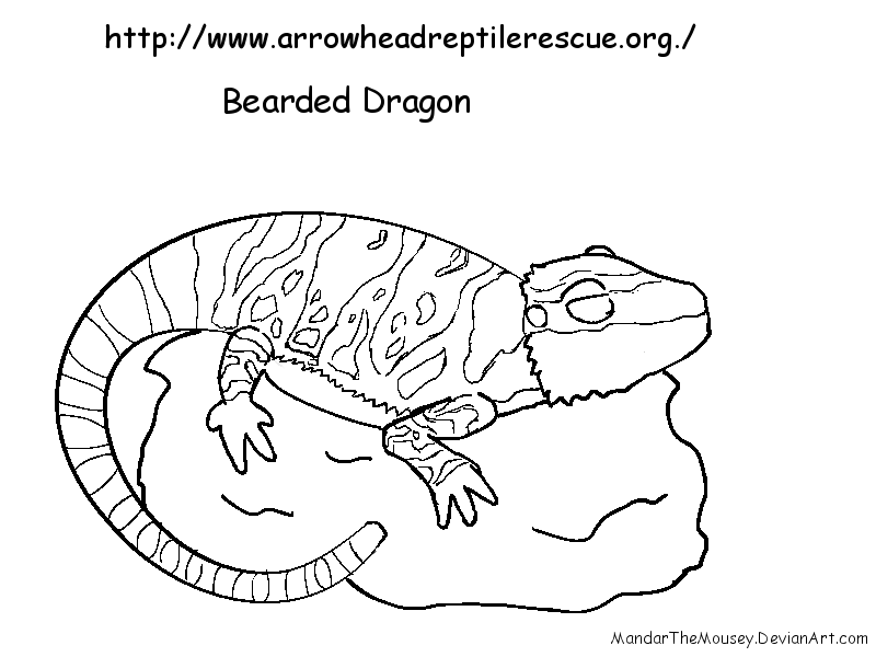 Ce Bearded Dragon Line By Mandarthemousey On Deviantart Bearded Coloring Pages