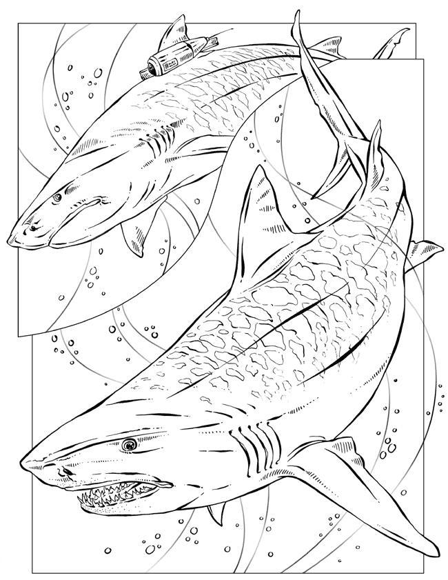 Fact Sheet: Sand Tiger Sharks | 841x650