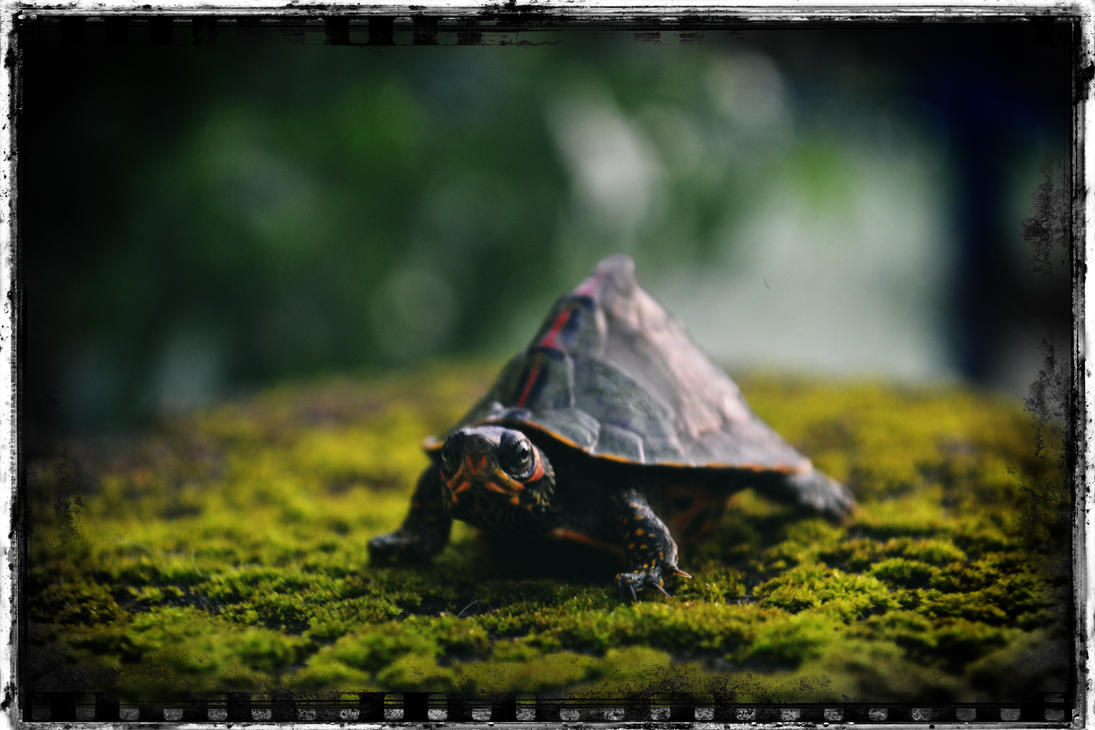 Tiny Turtle by fazeshifta