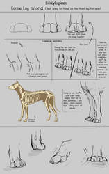 .:Canine Leg Tutorial:. by LikelyLupine