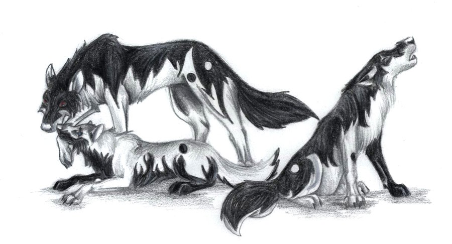 Yin Yang Wolves by Axelrox by TheWolfPack on DeviantArt
