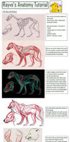 Wolf Tutorial by Rayvanna