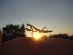 Pray As The Sun Descends '' by VerdrehtEngel777