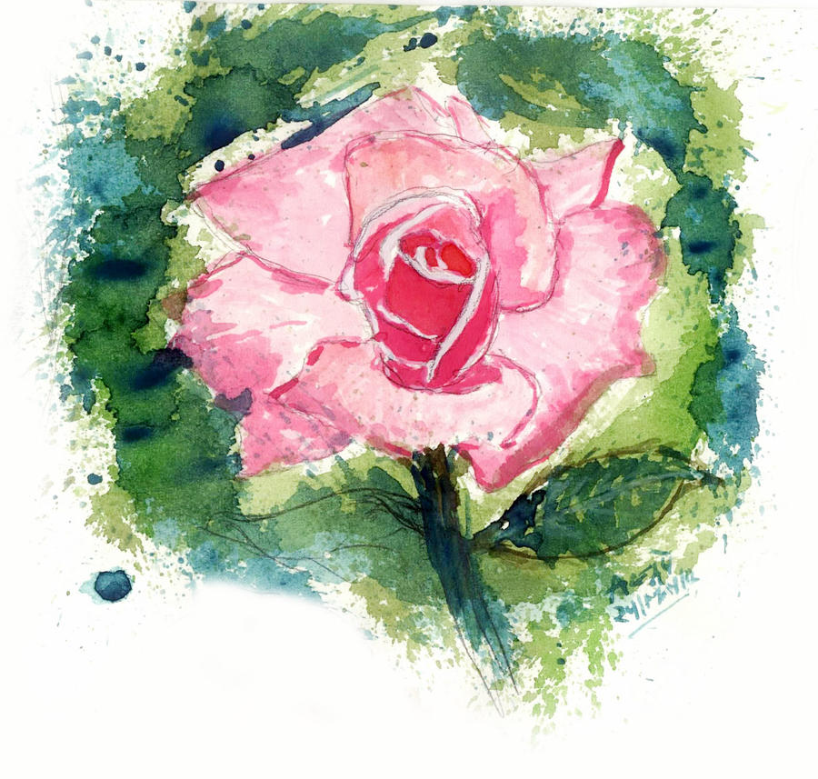 rose flower by pnna