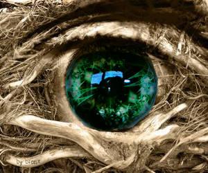 Trin's Eye by Viirin
