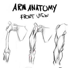 Arm Anatomy (Bridgman) Study