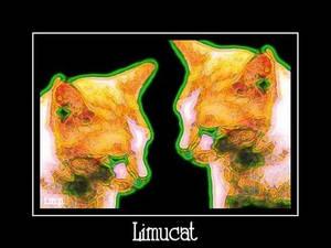 imagemkrphoto clones cats