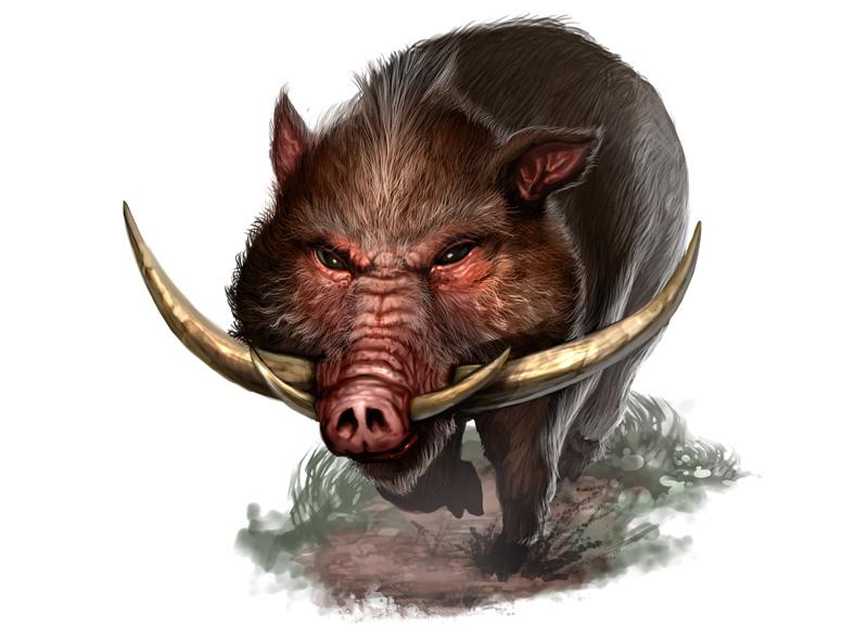 NATGEO Ind:Wild Boar by ekoputeh