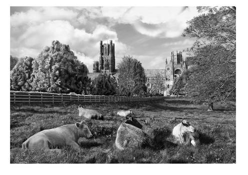 Ely Cathedral from Cherry Hill