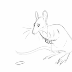 Rat Animation by LiLaiRa