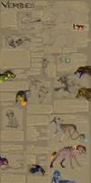 Vernides species ref sheet ENG