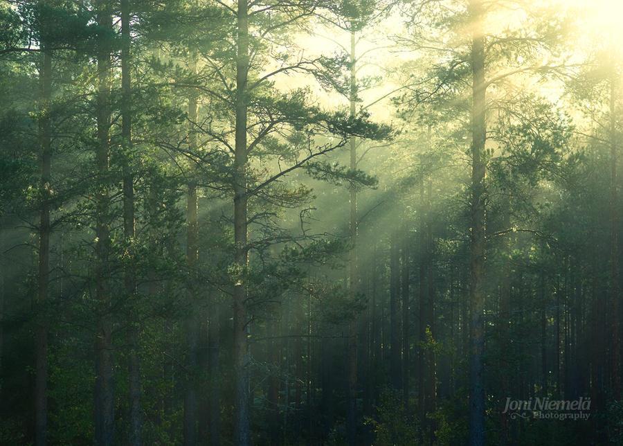 Rays by JoniNiemela