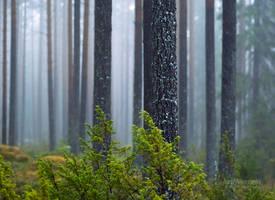 Misty Day In The Forest by JoniNiemela