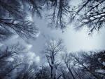 In The Snowy Birch Forest