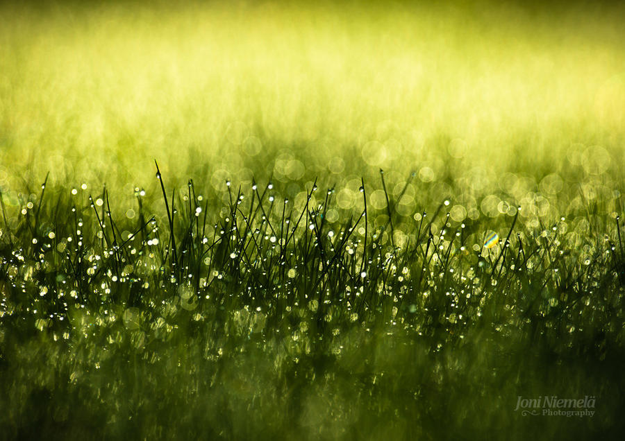 Morning Dew II by Nitrok
