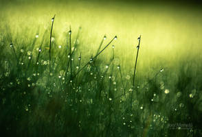 Morning Dew III by JoniNiemela