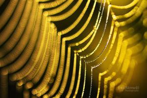 Golden Bokeh by JoniNiemela