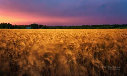 Waving In The Wind by JoniNiemela