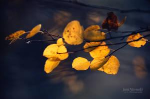 Autumn Leafs by JoniNiemela