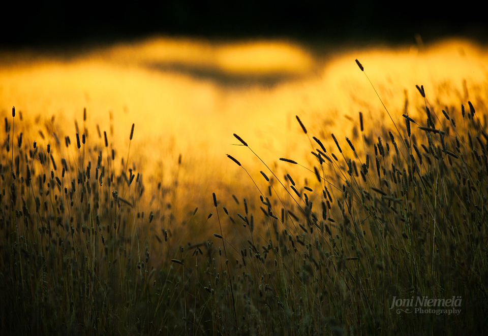 Yellow Light by JoniNiemela