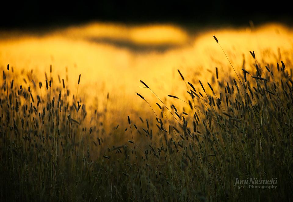 Yellow Light by Nitrok
