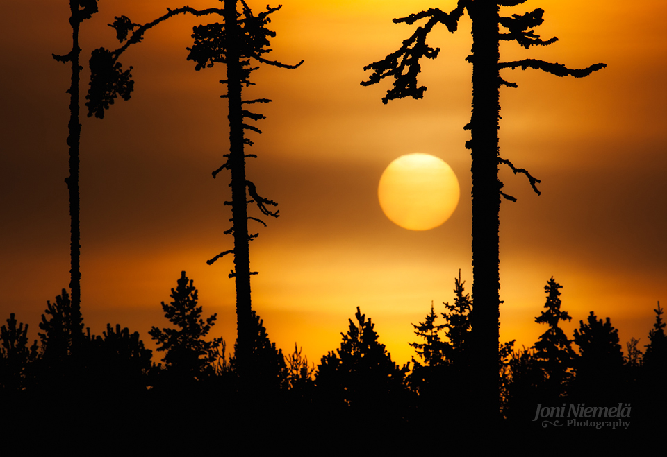 Tree Silhouettes by JoniNiemela