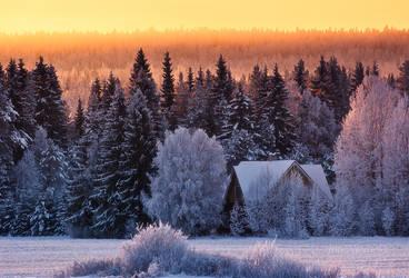 Cold Winter Day by JoniNiemela