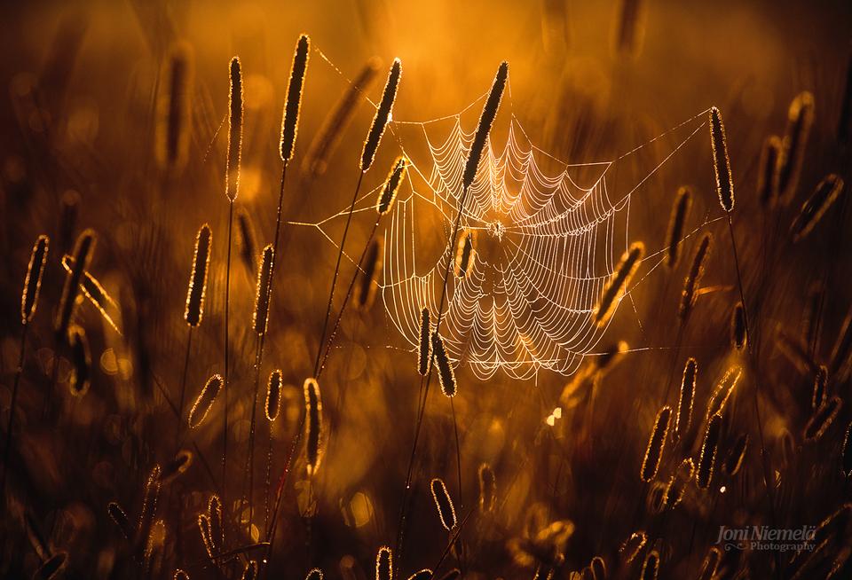 Cobweb by JoniNiemela