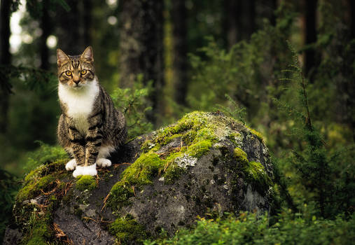 Vili In The Forest