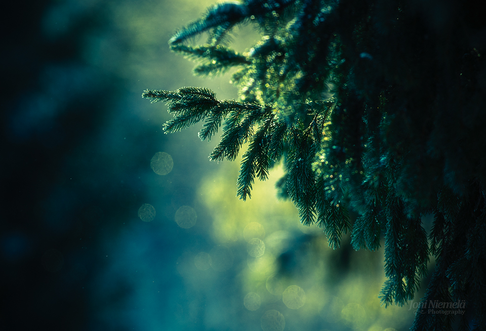 Cold Greens by Nitrok