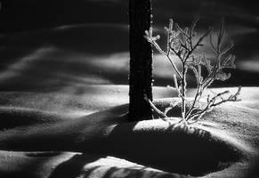 Trees And Snowbanks by JoniNiemela