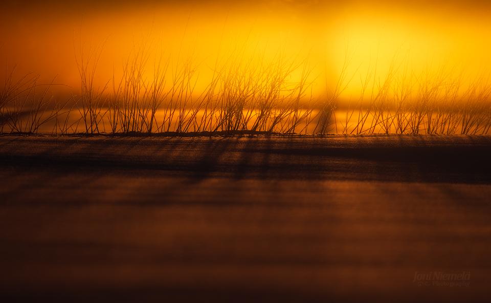 Willowline by JoniNiemela