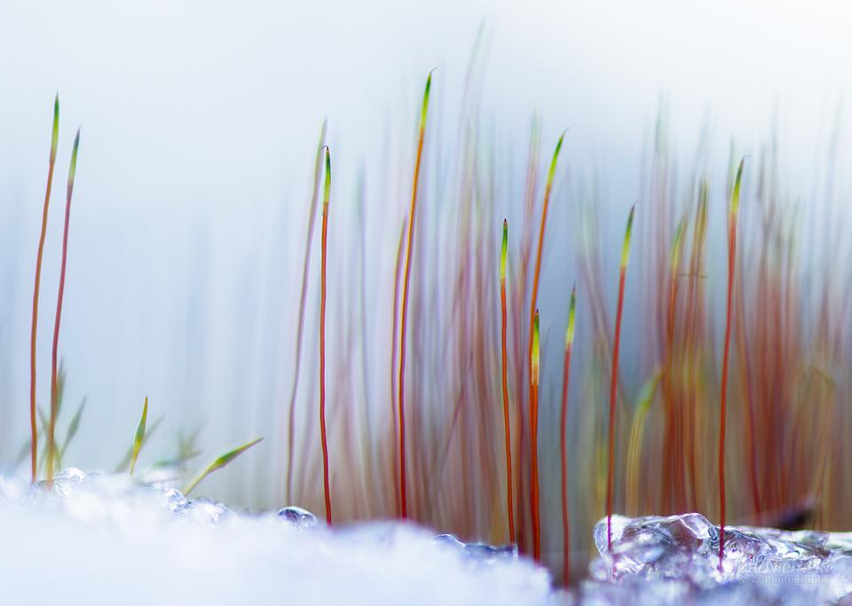 Spring by Nitrok