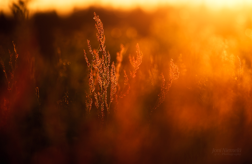Summer Reds by JoniNiemela