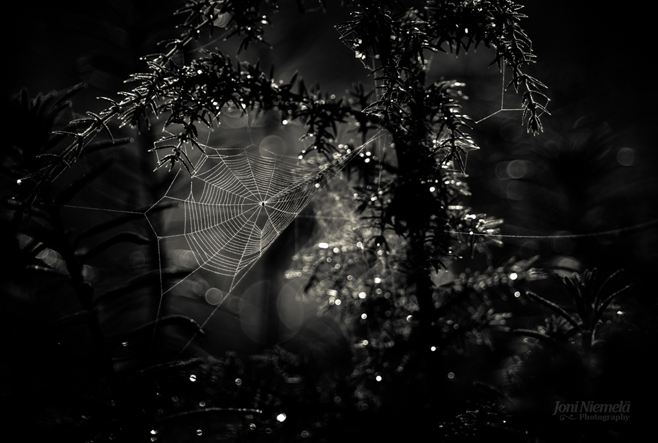 White Web by JoniNiemela